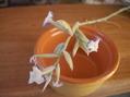 チランジア・ストラミネア開花
