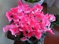 花の拡大撮り