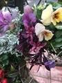 庭の花が咲いていないので😵💦パート1😆