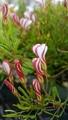 ふくおかルーバルガーデン2~新春の庭便り😉春のお花畑はまだ遠くて💞