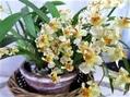 初春の花達 ③