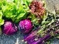 七種の野菜の収穫
