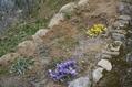 突然、春になりました(その1)。