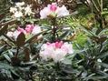 奈良で出会ったお花