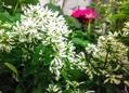 夏の花が元気で咲いています💐