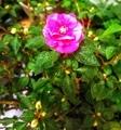 咲き始めた花たち