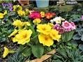 🌻今日の花たち🌻その12