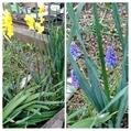 スティックセニョールの花❗