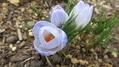 🌸ちょこっと春🌸