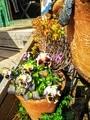 🐐さんの店のお花と野菜