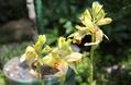武蔵野バラ会の花壇