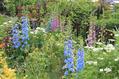 雨後の荒地ガーデン