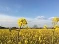 春のスケッチ✏️