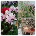行って来ました 春の花々とクレマチス展