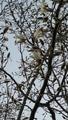 ふくおかルーバルガーデン2~春🌷の庭便り❗夜明け間近の空にモノトーンの花💠