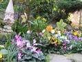 花壇の中が花盛り