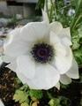春の白い花