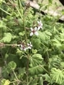 鉢植えの花たち