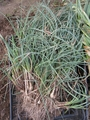 野菜の時間② 5月の収穫
