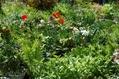 わが庭は緑になりき