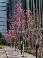 ガーデンネックレス横浜2019・・・みなとみらい
