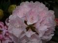 石楠花、モーニングマジック他