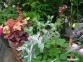 バラが一輪さいて、寄せ植えも綺麗になって。
