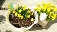 黄色いお花たち