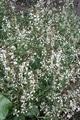 ハーブの花も可愛い