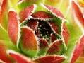 多肉植物写真練習その2