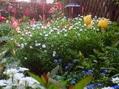 チューリップと他の花