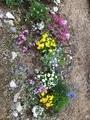 庭花壇ー中央悩み中