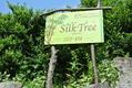 英国式リフレクソロジーサロン シルクツリー