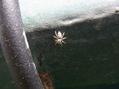 蜘蛛さん大忙し