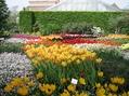 ベルギーの植物園5月・その1