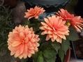 夏のお花を買って来ました✿