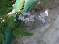 中国で見た花だけど…