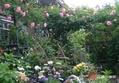 私の庭[i:230]