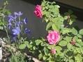今日の庭(^^♪