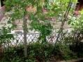 家の中から庭を眺めて~