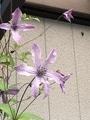 今日のお花と庭仕事