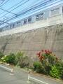 通勤途中の植物