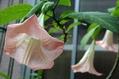 庭の花達(普通の花)