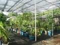 ウラカタ日記:温室で管理している鉢物の夏越し