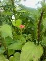 雨だけど 今日の花 ②