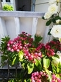 花友さんのお庭の花💠