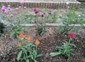 夏花壇の花