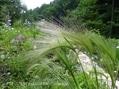 Natural Garden 私の庭 6/16