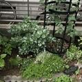 お庭の様子🎵