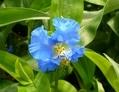 草津市の花咲きました